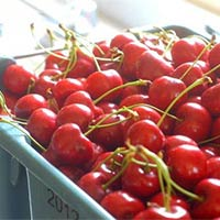 Fresh Red Cherry
