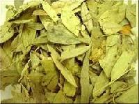 Senna Leaf