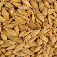 Animal Feed Barley