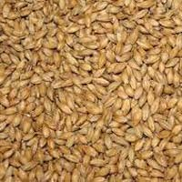 Animal Feed Sorghum