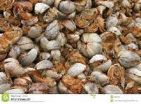 Coconut Husk
