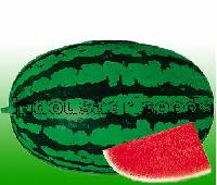 Indo Us 9945 Watermelon F1 Hybrid Seeds