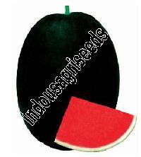 Indo Us Raksha Watermelon F1 Hybrid Seeds
