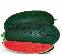 Indo Us Ritu Baby Watermelon F1 Hybrid Seeds