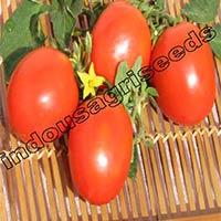 Indo Us 999 Tomato F1 Hybrid Seeds
