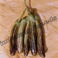 Indo Us Shivlaheri Brinjal F1 Hybrid Seeds