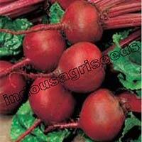Indo Us Shweta Beet Root F1 Hybrid Seeds