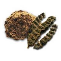 Shikakai Powder ( Acacia Concinna )