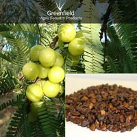 Aonla fruit  seeds ( Emblica officinalis )