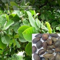 Badam Fruit  Seeds ( Prunus Dulcis )