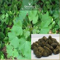 Jatropha Tree Seeds  ( Jatropha Curcus )
