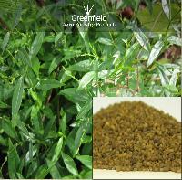 Kalmegh Medicinal Seeds ( Andrographis Paniculata )
