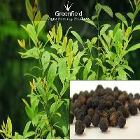 White Sandal Tree Seeds  ( Santalum Album )