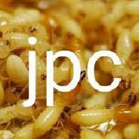 Anti termite demak treatment servicse
