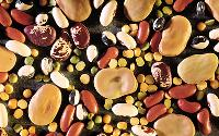 hybrid vegetable seed