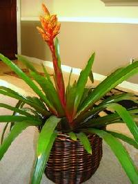 Indoor Exotic Plant
