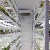Vegetable Seedlings Tissue Culture Plant