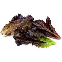 Fresh Red Lettuce