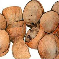 Coconut Shell - Manufacturer, Exporters and Wholesale Suppliers,  Tamil Nadu - Avt Exports