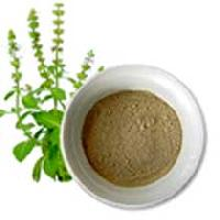 Tulsi Powder
