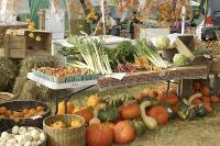 Organic Processed Food Ofd - 02