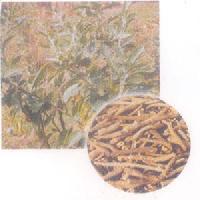 Withania Somnifera - Manufacturer, Exporters and Wholesale Suppliers,  Uttarakhand - Kumaon Chemical Products