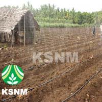 Agriculture Drip Irrigation System