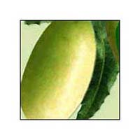 Neem Fruit 02