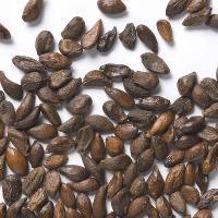 Shrubs Seeds
