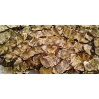 Tamarind Flower - Manufacturer, Exporters and Wholesale Suppliers,  Maharashtra - Sameer Traders