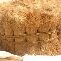 bristle coir fiber