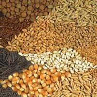 Agriculture Commodity