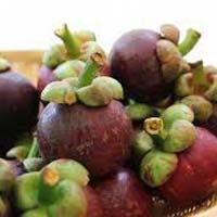 Exotic Mangosteen Fruit