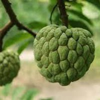 Ripe Custard Apple