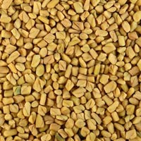 Fenugreek Seed ( Methi )