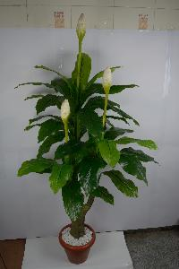 Artificial Decorative Plant