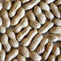 Shelled Ground Nut, Unshelled Ground Nut