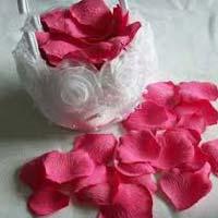 Rose Flower/petels