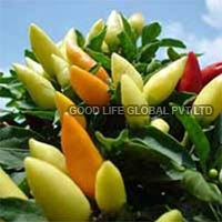 Capsicum Annuum Seeds (ornamental Chilly-choice Mixed)