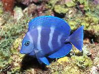 Exotic Marine Fishes