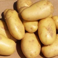 Fresh Potato