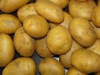 Fresh Potatos