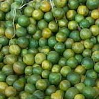 Fresh Nagpur Orange