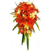 Lilium Orchid