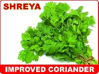 Green Coriander Seeds (shreya)