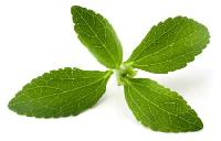 Fresh Stevia Leaves