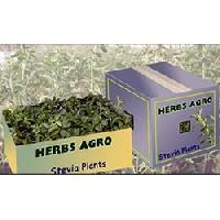 Stevia Herbal Product