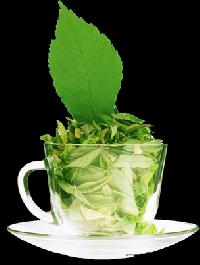 Stevia Tea Leaves Sweetener