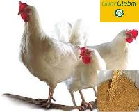 Guar Korma for Poultry