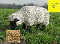 Guar Korma for Sheep Feed